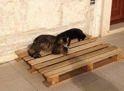 Mačja siesta u Rovinju