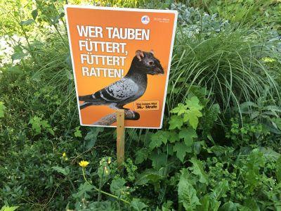 Bečani baš nikako ne vole golubove