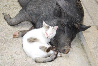 Kućni ljubimci u San Mauru