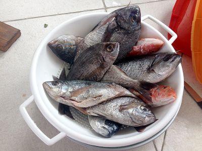 Svježe ribe nisu lako dostupne