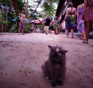 Ovako lijepe mačke su rijetke na ulicama