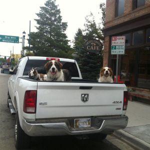Uobičajena scena na ulicama