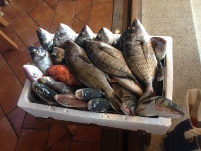 Standardno dobra ponuda ribe